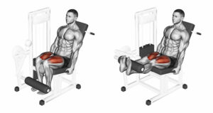 legs extansion ejercicios